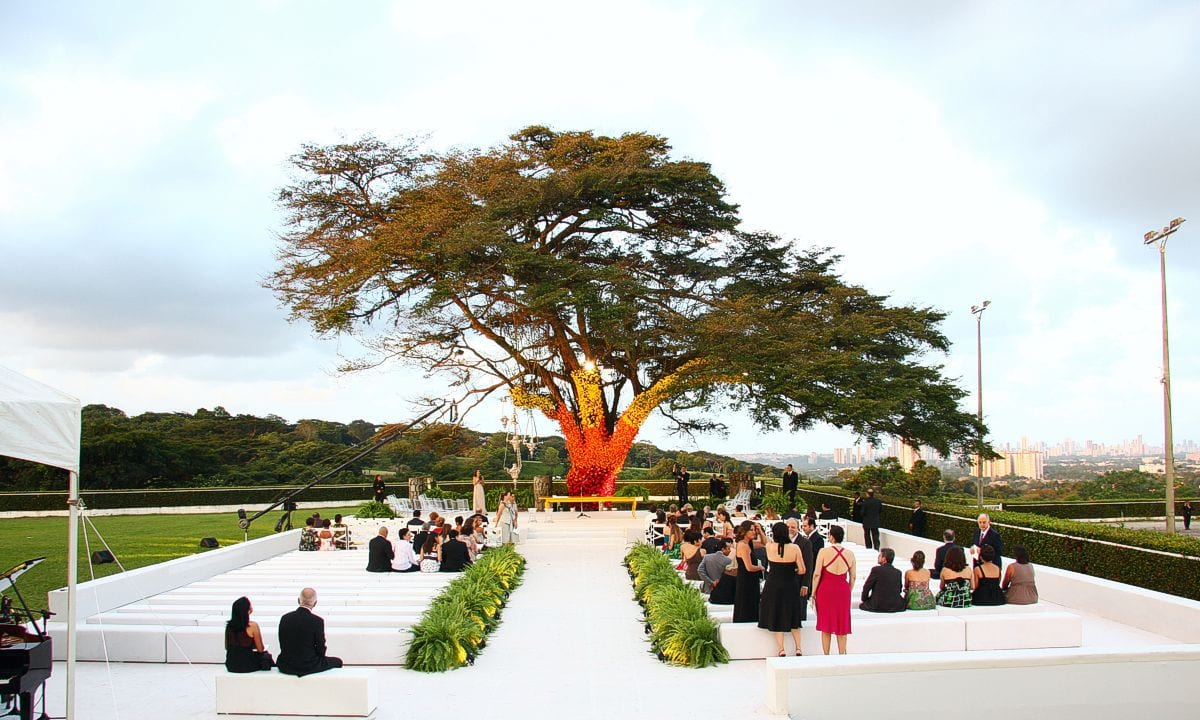 a árvore florida na Coudelaria Souza Leão